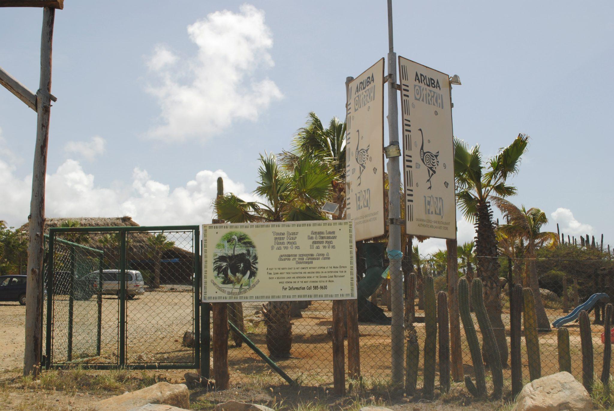 Struisvogel farm Aruba